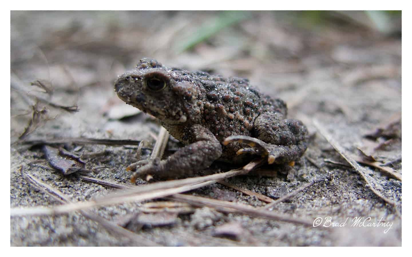 toad chilkoot trail