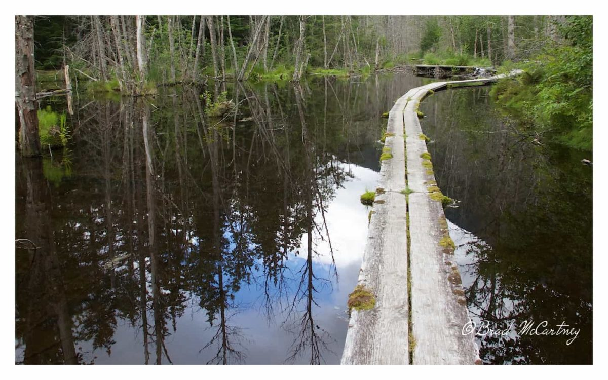 beaver ponds chilkoot trail