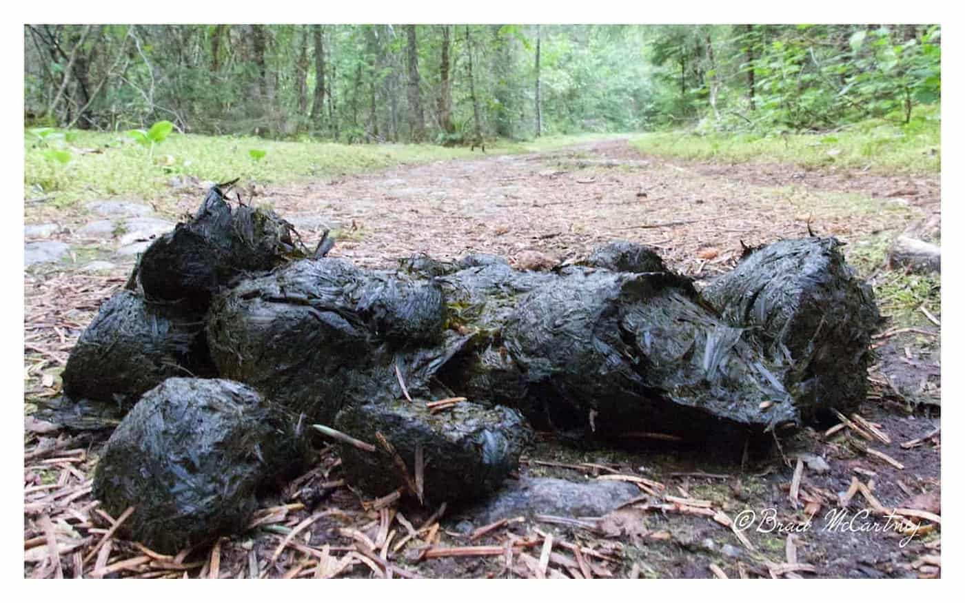 Bear poo chilkoot trail