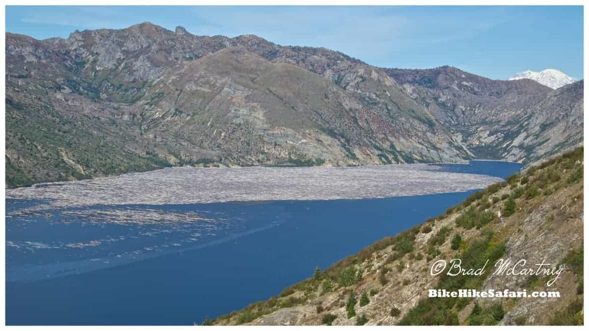 Lake at the base of Mt St Helens choked with timber from the eruption 34 years ago