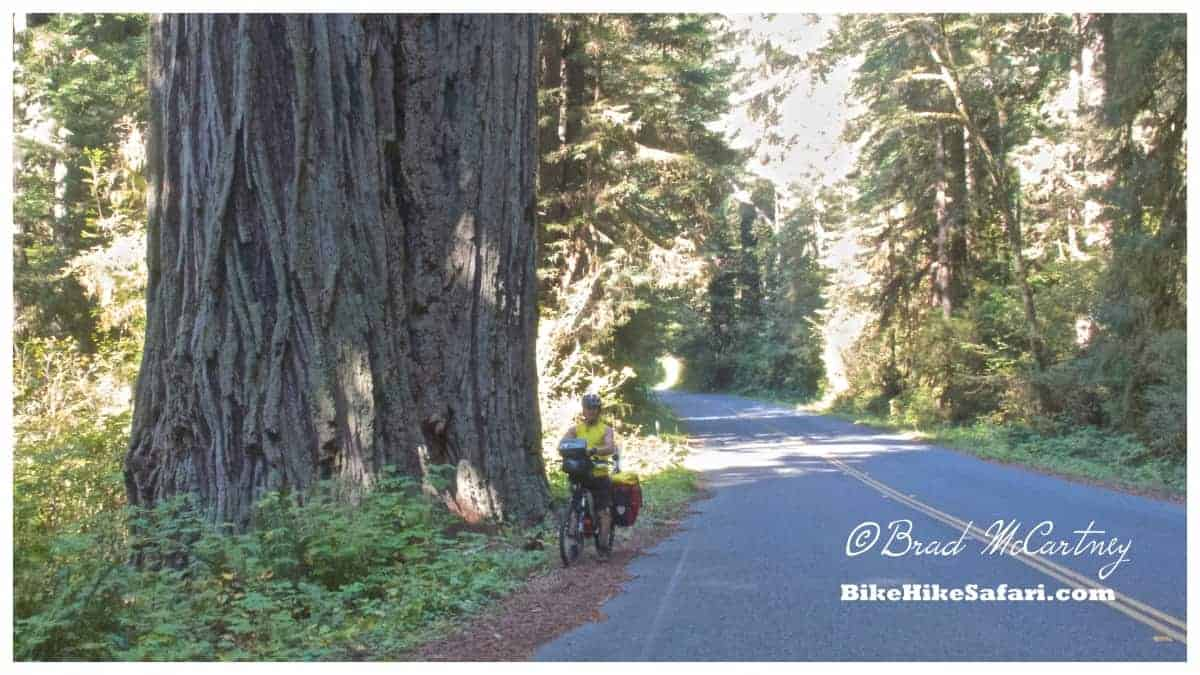 cycling the Redwood in northern california