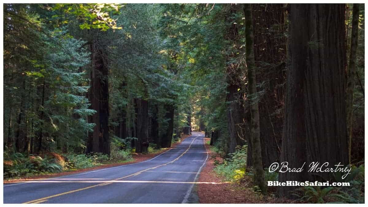 cycling the avenue of the giants