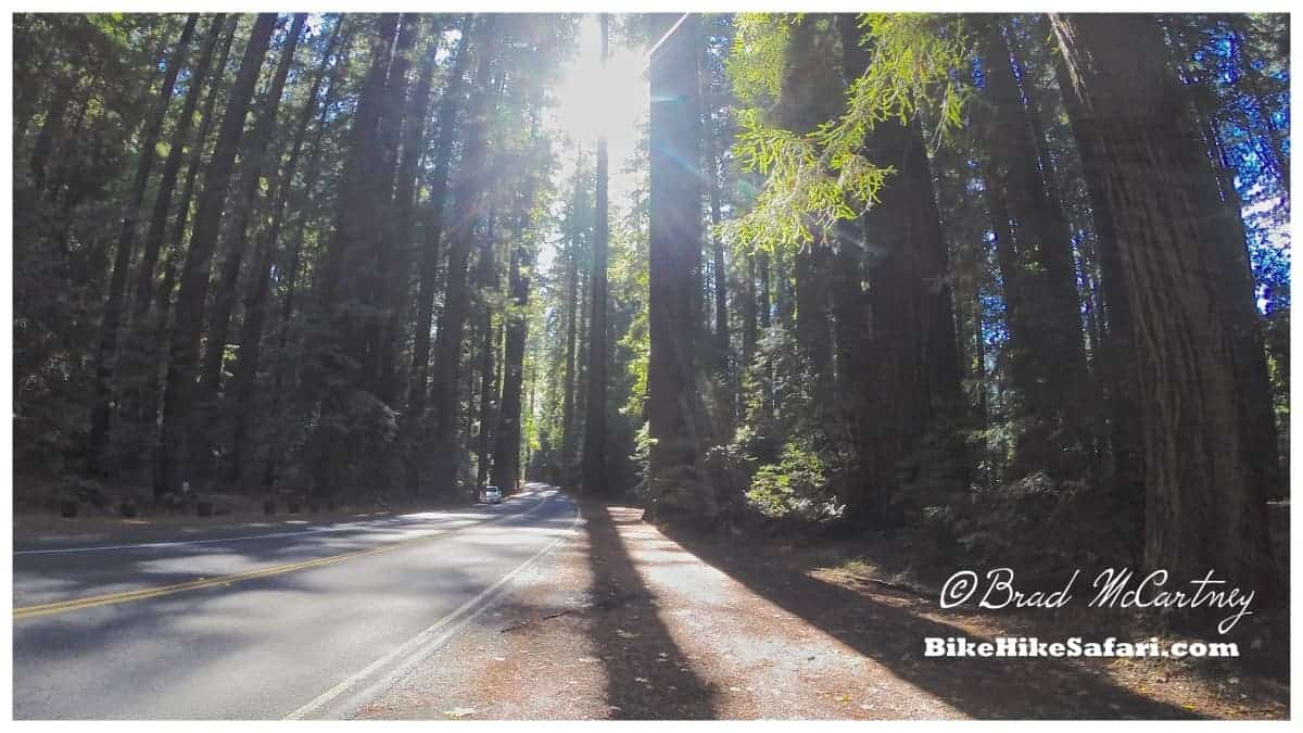 morning cycling through the avenue of the giants