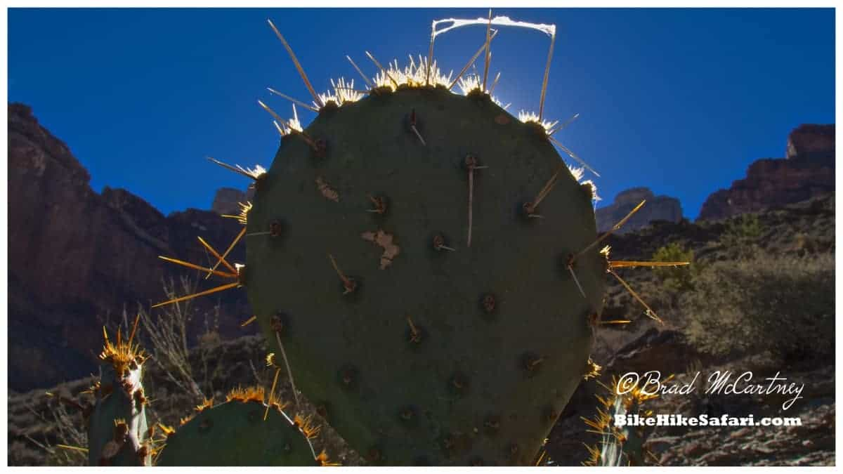 I only walked into a cactus thorn once, only once.