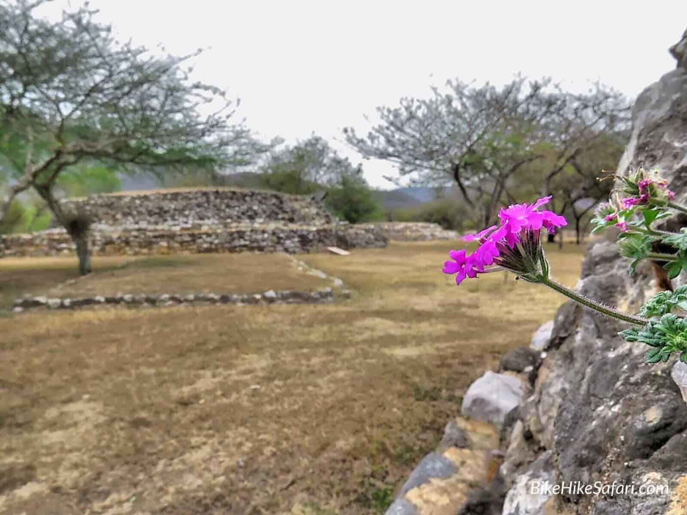Flowers at Tancama Ruins