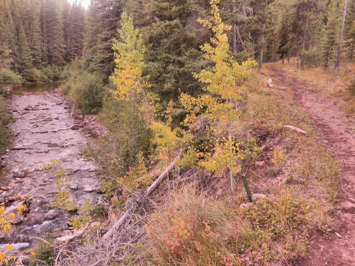 Nice easy trail