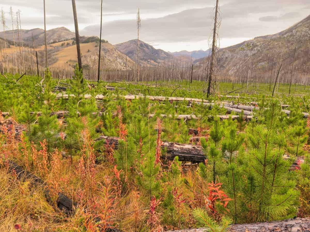 Hiking through the Bob Marshall Wilderness
