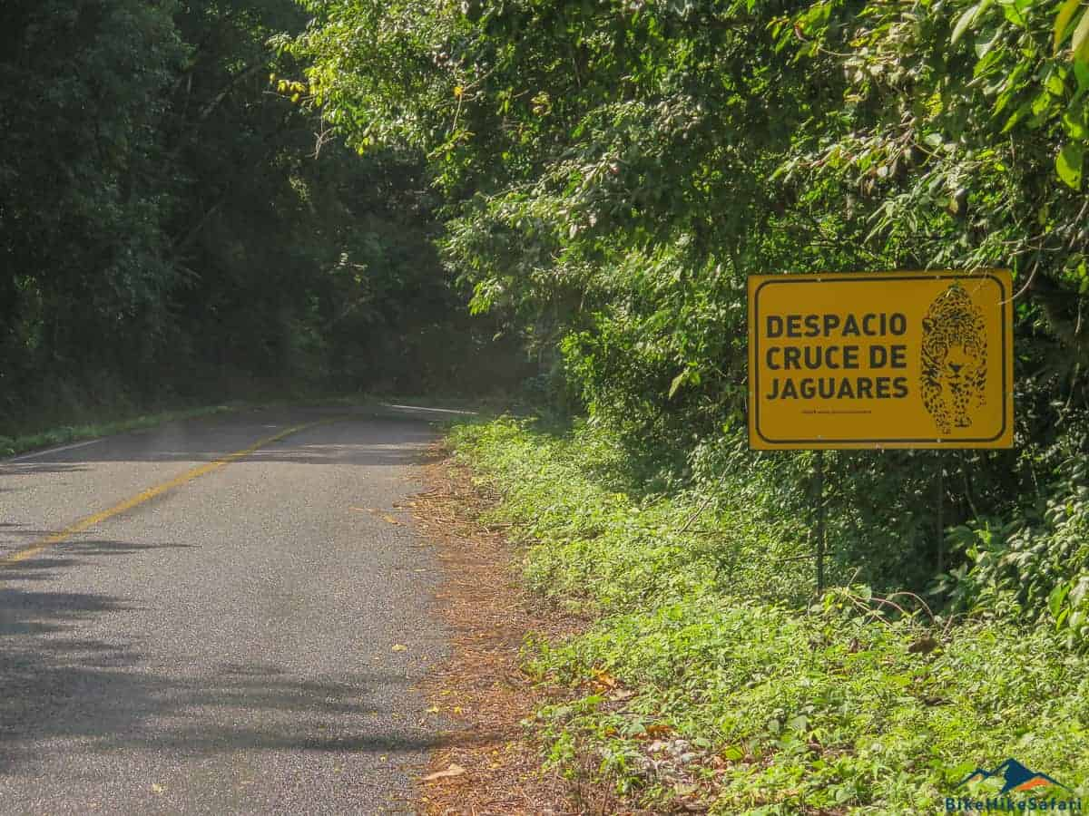 Looking for Jaguars in the Mexican Jungle