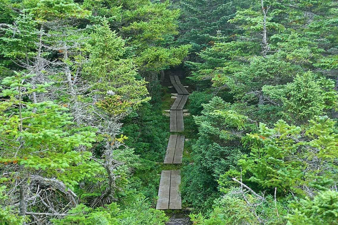 Appalachian Trail misty morning trail