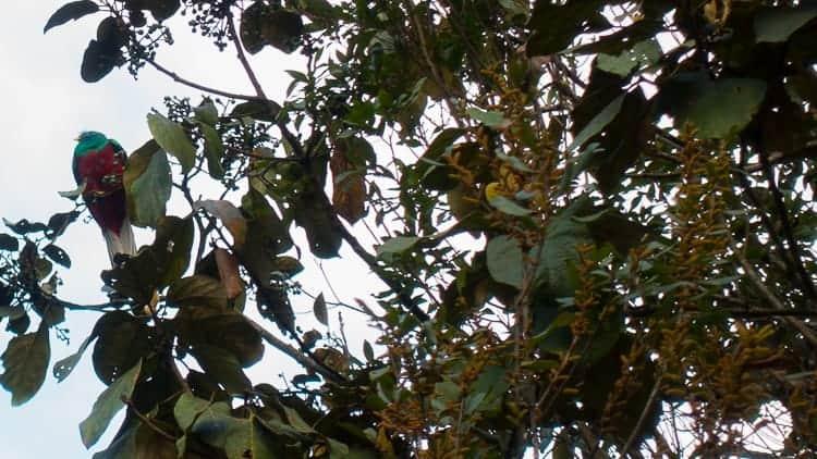 guatemala quetzal biosphere reserve